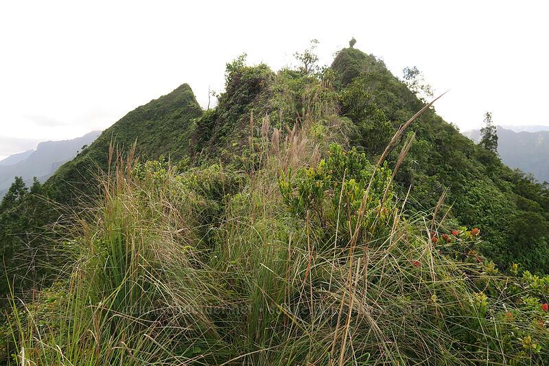 ridgetop trail [Hihimanu Trail, Hanalei, Kaua'i, Hawaii]