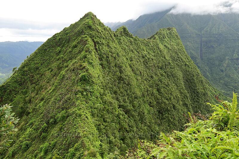 Hihimanu's southern summit [north summit of Hihimanu, Hanalei, Kaua'i, Hawaii]