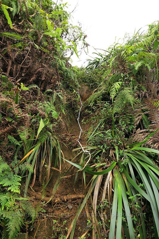 rope #27 [Hihimanu Trail, Hanalei, Kaua'i, Hawaii]