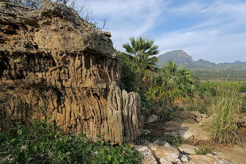 eroded sandstone [Makauwahi Cave Trail, Maha'ulepu, Kaua'i, Hawaii]