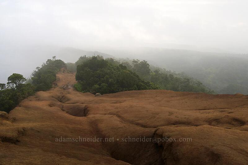 clouds on the Pihea Trail [Pihea Trail, Koke'e State Park, Kaua'i, Hawaii]