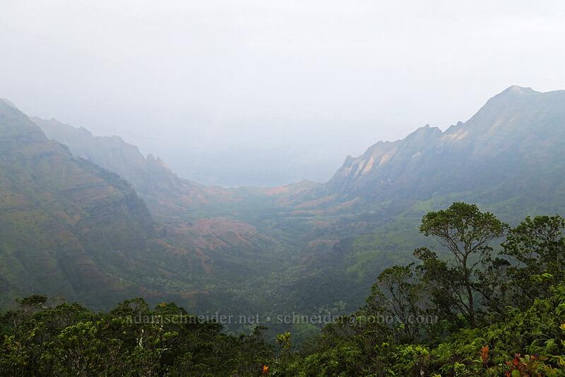 hazy Kalalau Valley [Pihea Trail, Na Pali-Kona Forest Reserve, Kaua'i, Hawaii]