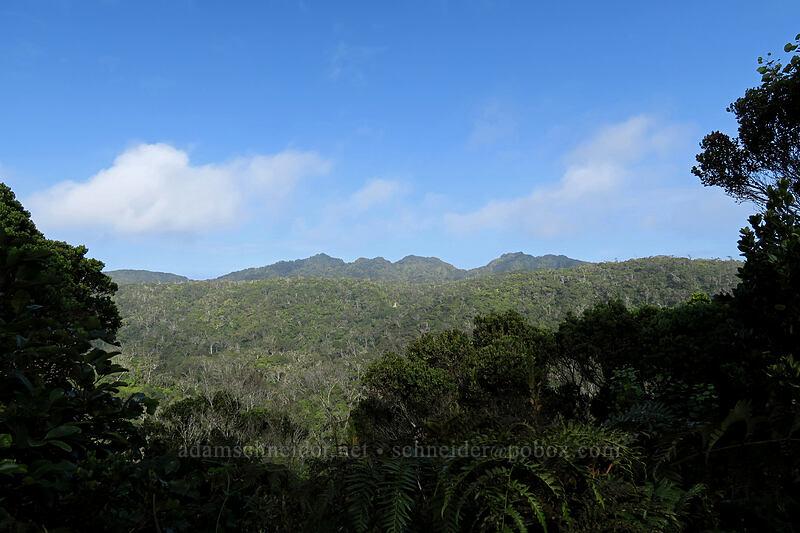 ridge northeast of Pihea [Alaka'i Swamp Trail, Alaka'i Wilderness Preserve, Kaua'i, Hawaii]