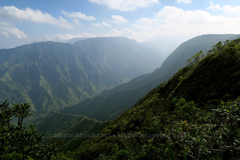 upper Wainiha Valley [Kilohana Viewpoint, Alaka'i Wilderness Preserve, Kaua'i, Hawaii]