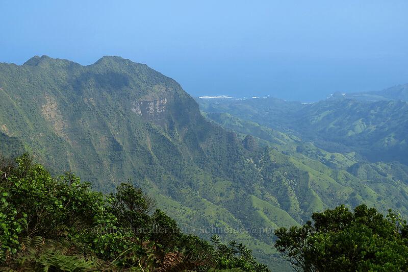 Pali 'Ele'ele [Kilohana Viewpoint, Alaka'i Wilderness Preserve, Kaua'i, Hawaii]