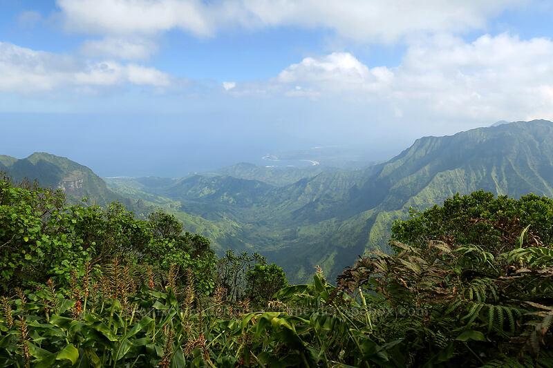 view toward Hanalei Bay [Kilohana Viewpoint, Alaka'i Wilderness Preserve, Kaua'i, Hawaii]