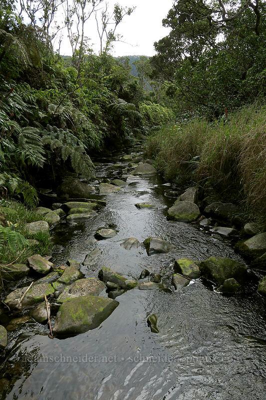 stream [Alaka'i Swamp Trail, Alaka'i Wilderness Preserve, Kaua'i, Hawaii]