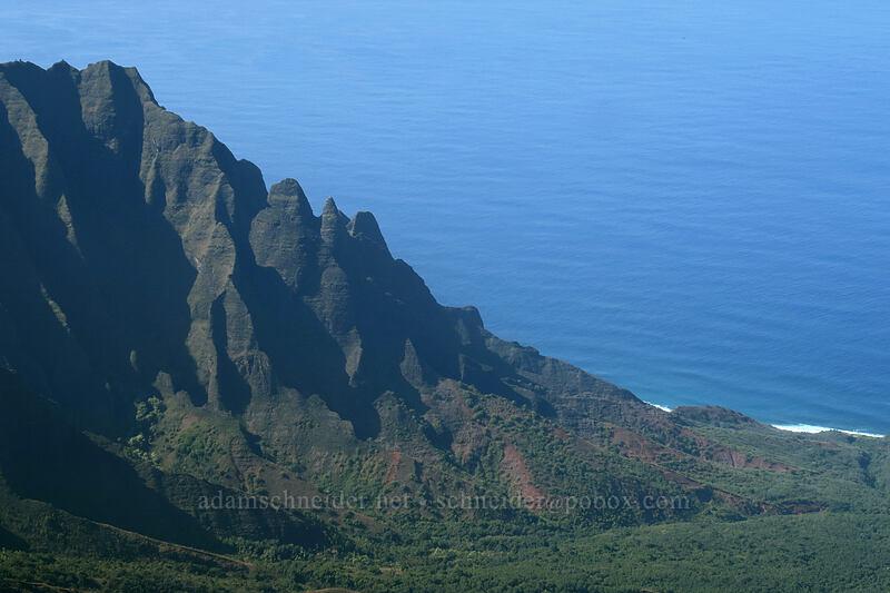 Nakeikiana'i'iwi [Pihea Trail, Na Pali-Kona Forest Reserve, Kaua'i, Hawaii]