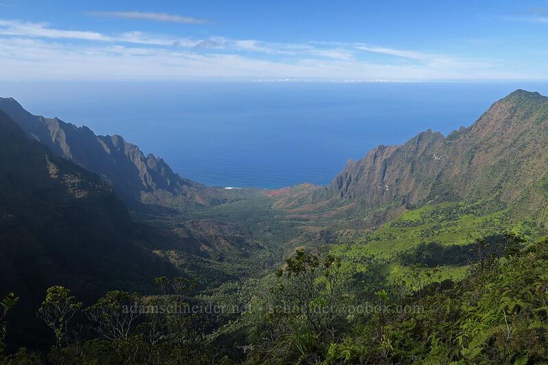 Kalalau Valley [Pihea Trail, Na Pali-Kona Forest Reserve, Kaua'i, Hawaii]