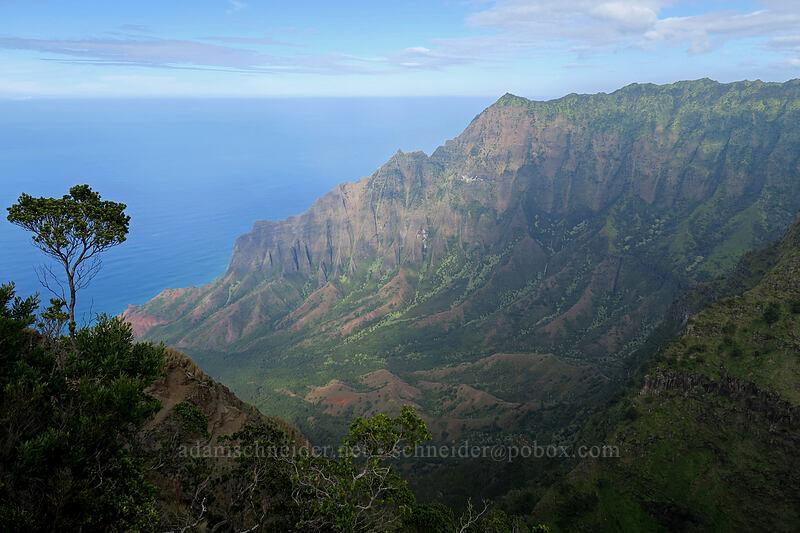 Kalalau Valley [Kalepa Ridge Trail, Na Pali Coast State Park, Kaua'i, Hawaii]