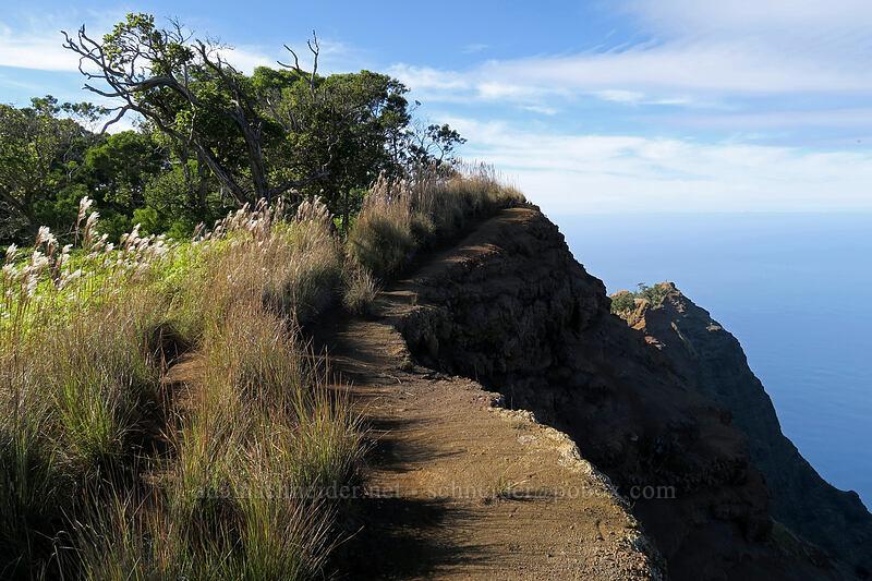 the trail [Kalepa Ridge Trail, Na Pali Coast State Park, Kaua'i, Hawaii]