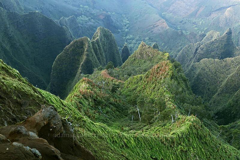 west side of Kalalau Valley [Kalepa Ridge Trail, Na Pali Coast State Park, Kaua'i, Hawaii]