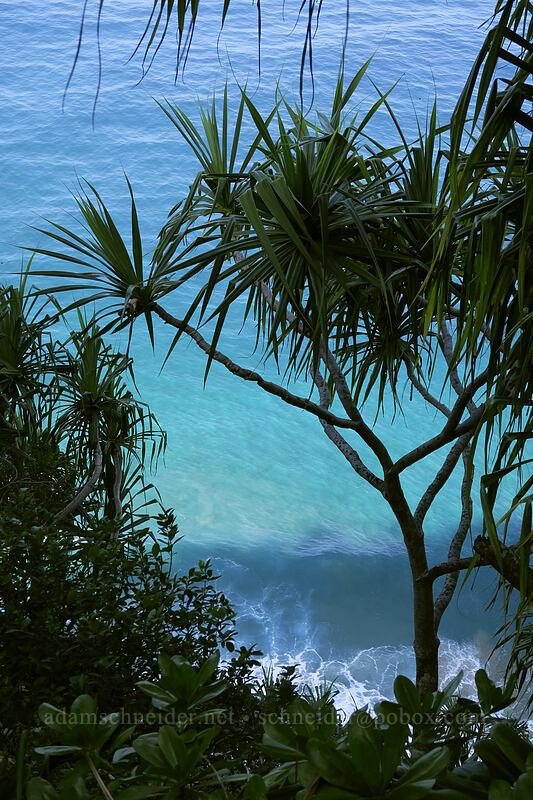 hala tree & blue water (Pandanus tectorius) [Kalalau Trail, Na Pali Coast State Park, Kaua'i, Hawaii]