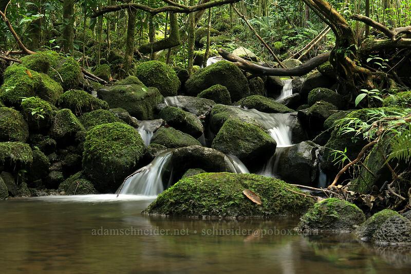 mossy stream [Hanakapi'ai Falls Trail, Na Pali Coast State Park, Kaua'i, Hawaii]