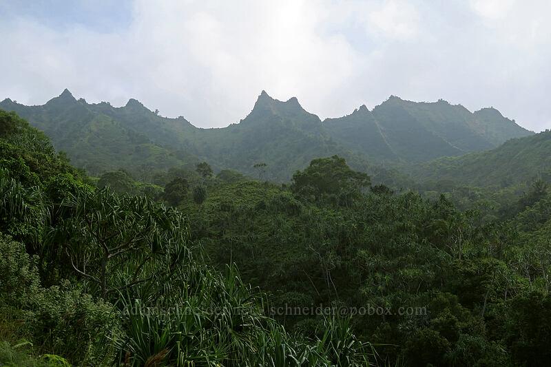 ridge behind Mauna Pulu'o [Kalalau Trail, Na Pali Coast State Park, Kaua'i, Hawaii]