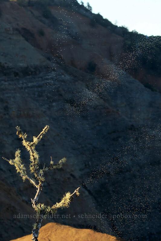 insect rays (?!) [Waimea Canyon Lookout, Waimea Canyon State Park, Kaua'i, Hawaii]