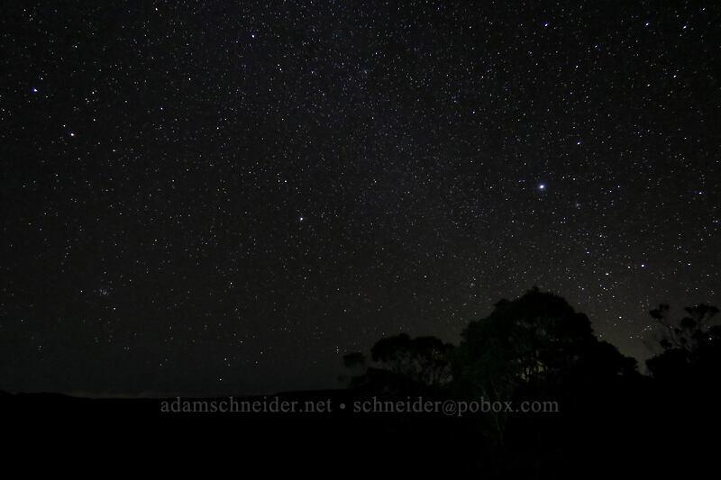 stars & tree silhouettes [Pu'u o Kila, Koke'e State Park, Kaua'i, Hawaii]
