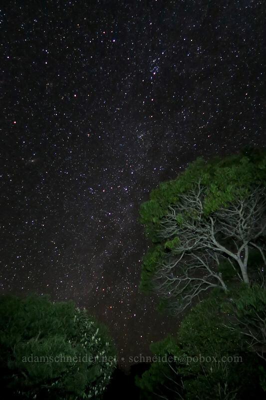 Milky Way & flashlight-painted trees [Pu'u Hinahina, Waimea Canyon State Park, Kaua'i, Hawaii]