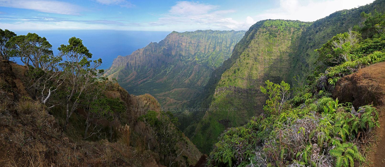 Kalepa Ridge panorama [Kalepa Ridge Trail, Na Pali Coast State Park, Kaua'i, Hawaii]