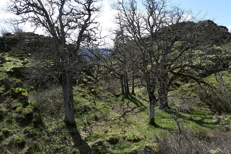 oak glen [The Labyrinth, Klickitat County, Washington]