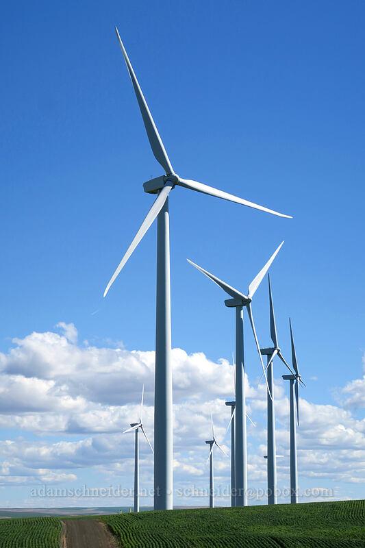 wind turbines [Wasco-Heppner Highway, Sherman County, Oregon]
