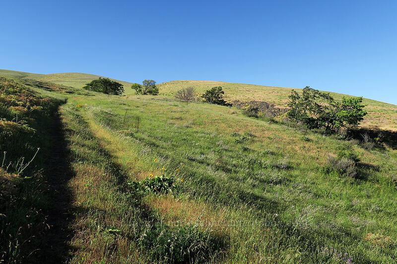 Seven-Mile Hill [Seven-Mile Hill, Wasco County, Oregon]