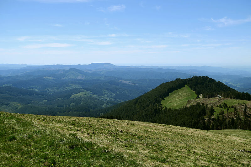 view to the west [Mary's Peak summit, Siuslaw National Forest, Oregon]