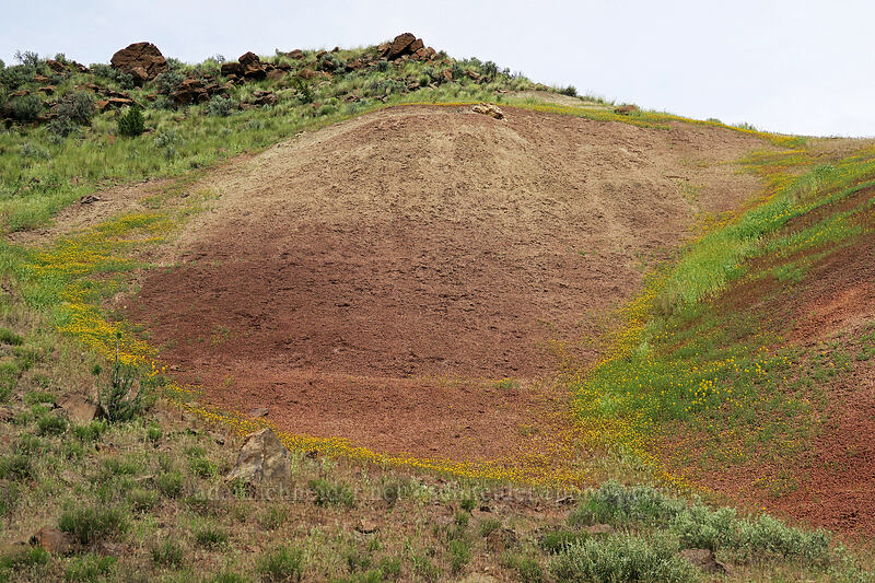 wildflower-bordered clay hills [Highway 19, John Day Fossil Beds National Monument, Oregon]