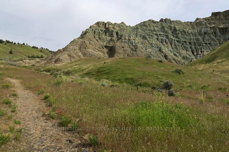 bluish rocks [Blue Basin Trail, John Day Fossil Beds National Monument, Oregon]