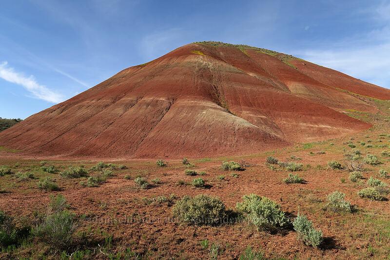 a painted hill [Sutton Mountain WSA, Wheeler County, Oregon]