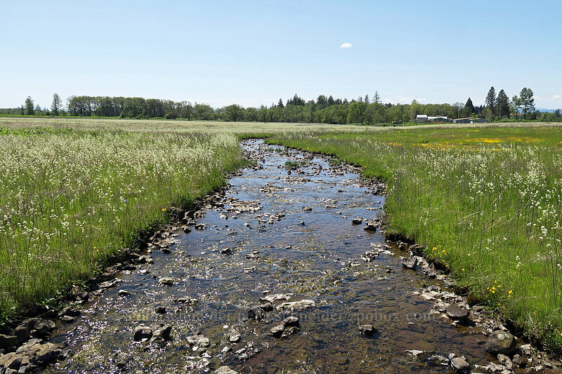 seasonal stream [Kingston Prairie Preserve, Linn County, Oregon]