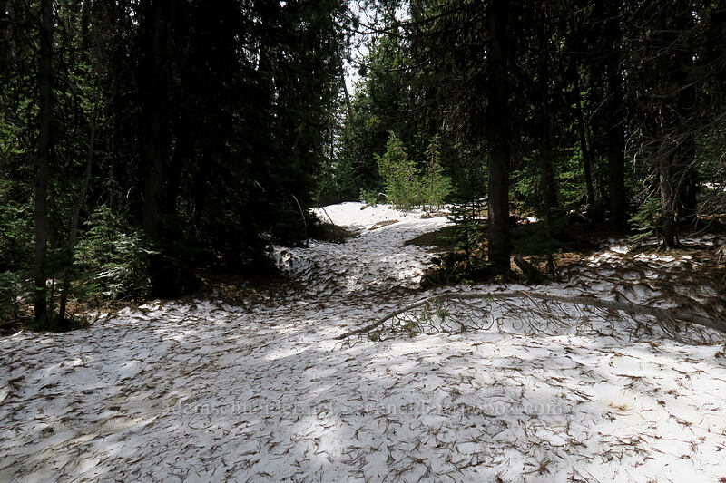 snow [Independent Mine Trail, Ochoco National Forest, Oregon]