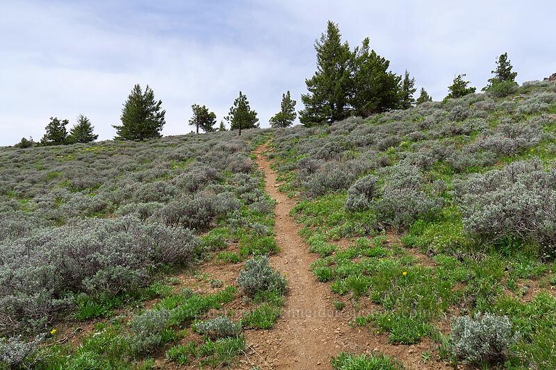 trail through sagebrush [Line Butte Tie Trail, Ochoco National Forest, Oregon]