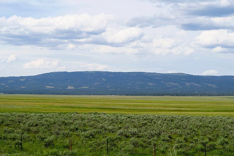 Big Summit Prairie [Forest Road 30, Big Summit Prairie, Oregon]