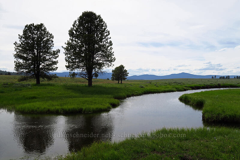 Crooked River & pine trees [Forest Road 30, Big Summit Prairie, Oregon]