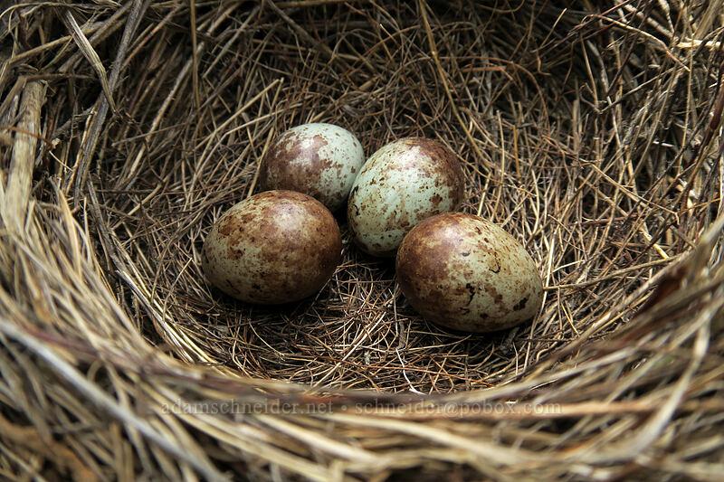 bird's nest [Forest Road 30, Big Summit Prairie, Oregon]