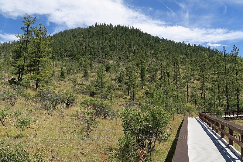 Eight Dollar Mountain [Eight Dollar Mountain Botanical Wayside, Rogue River-Siskiyou National Forest, Oregon]