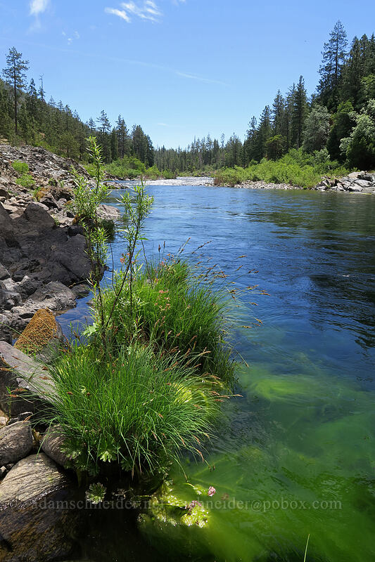Illinois River [Eight Dollar Bridge, Rogue River-Siskiyou National Forest, Oregon]