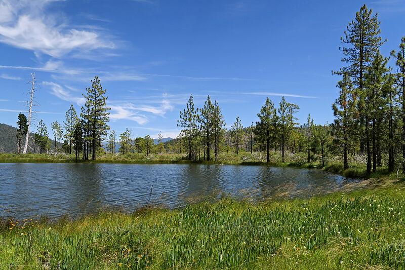 huge vernal pool [Days Gulch Botanical Area, Rogue River-Siskiyou National Forest, Oregon]