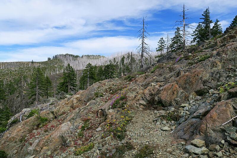wildflowers & rocks [Babyfoot Lake Trail, Kalmiopsis Wilderness, Oregon]