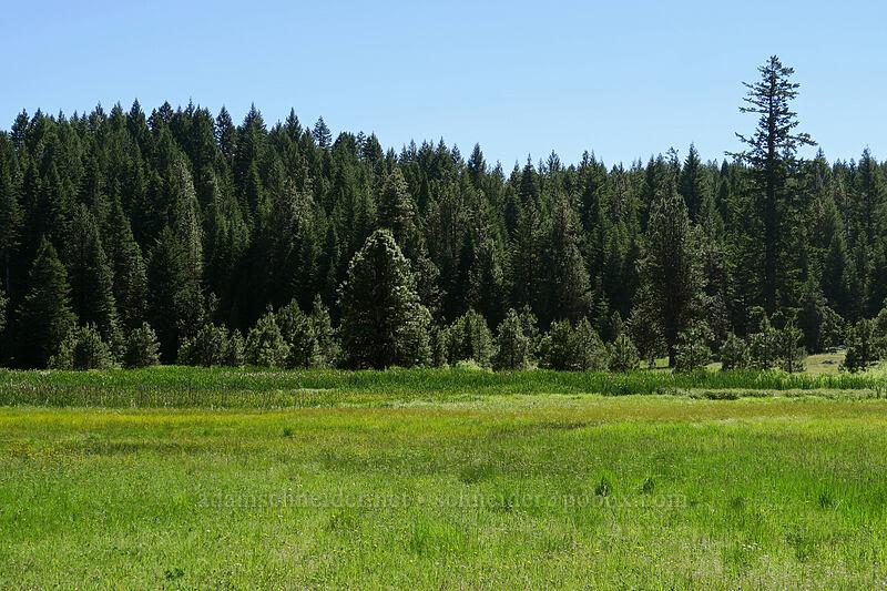 wet meadow [Old Hyatt Prairie Road, Cascade-Siskiyou National Monument, Oregon]