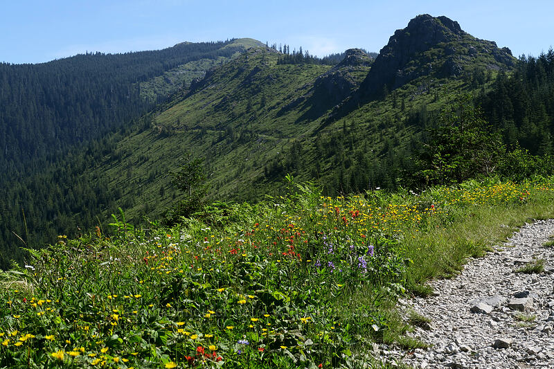 Pyramid Rock & wildflowers [Grouse Vista Trail, Yacolt Burn State Forest, Washington]