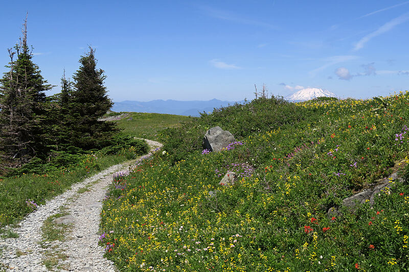 wildflowers & Mt. St. Helens [Silver Star Mountain Trail, Gifford Pinchot National Forest, Washington]