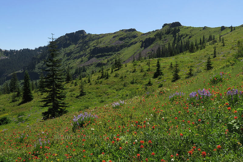 wildflowers & crags [Ed's Trail, Gifford Pinchot National Forest, Washington]