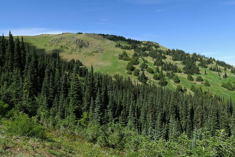 Hurricane Hill [Hurricane Hill Trail, Olympic National Park, Washington]