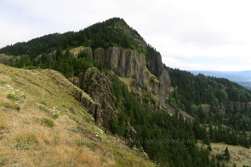 Hamilton Mountain's summit [Little Hamilton Mountain, Beacon Rock State Park, Washington]