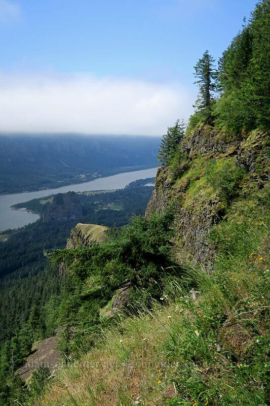 clifftop meadow [Hamilton Mountain, Beacon Rock State Park, Washington]