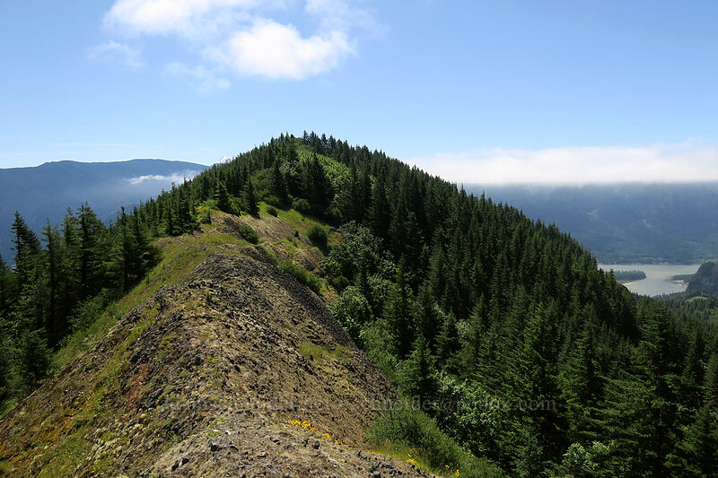 summit ridge [Hamilton Mountain, Beacon Rock State Park, Washington]