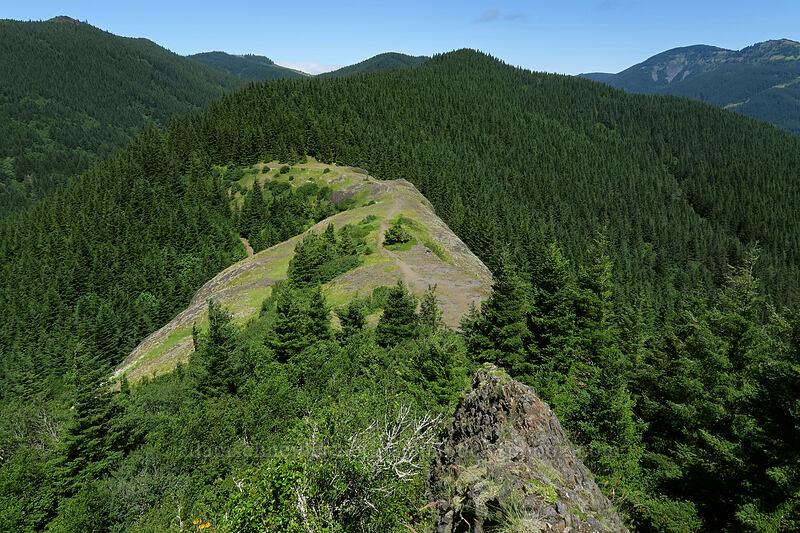 Hamilton Mountain saddle [Hamilton Mountain, Beacon Rock State Park, Washington]
