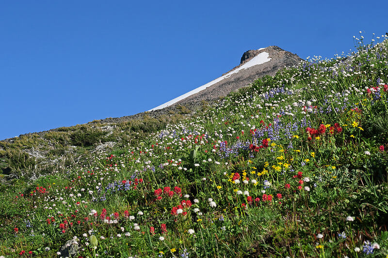 subalpine wildflowers & Barrett Spur [above Wy'East Basin, Mt. Hood Wilderness, Oregon]